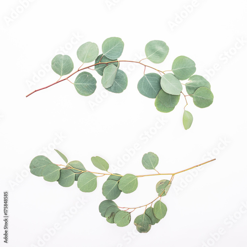 Door stickers Floral Green eucalyptus branches on white background
