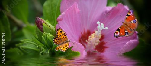 Photo  Banner mit Blüte und Schmetterlinge
