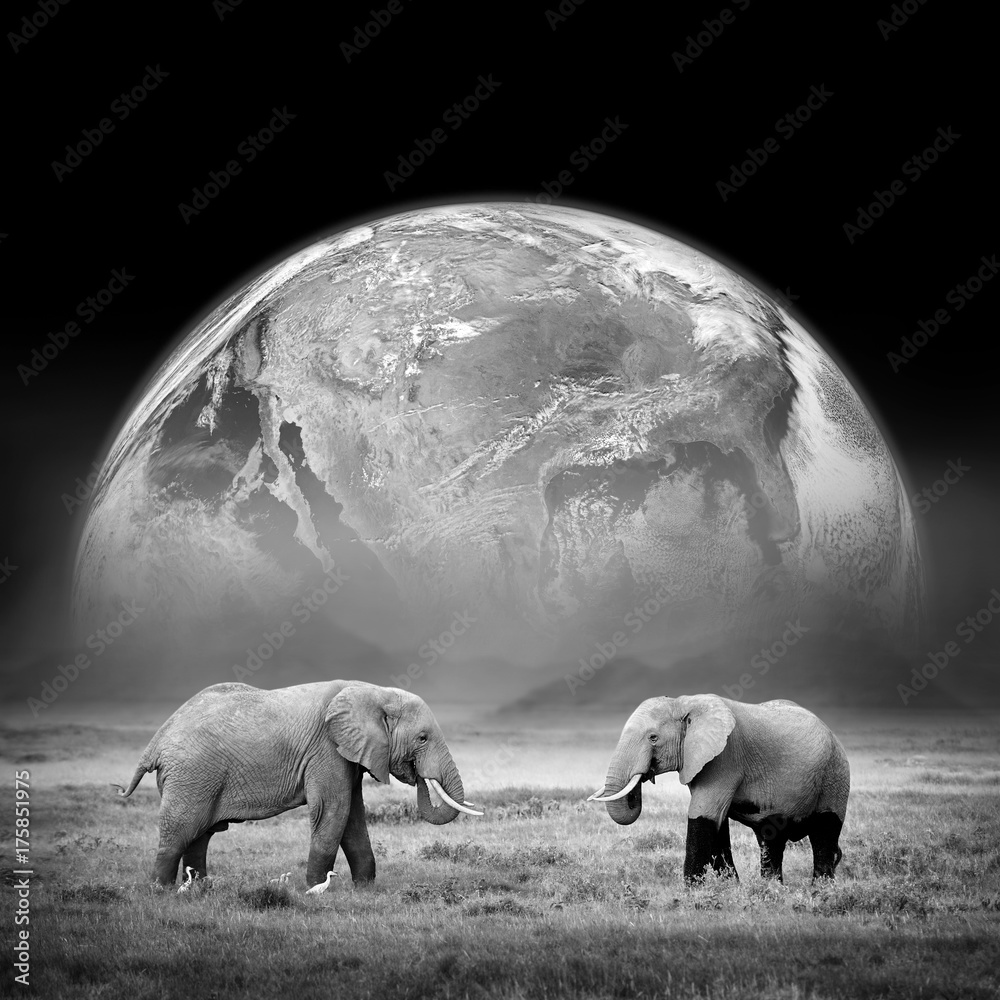 Elephants on the background of the Earth. Elements of this image furnished by NASA