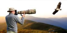 Professional Wildlife Photogra...