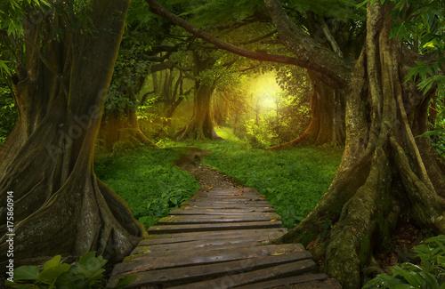 Foto op Canvas Bamboo Asian jungle