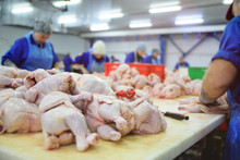 The Poultry Processing In Food...