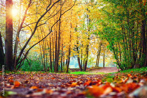 Staande foto Herfst Autumn scene in park. Landscape of colorful autumn. Fall nature on sunset