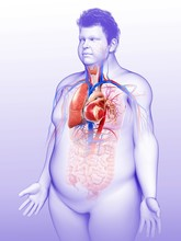Illustration Of Man's Heart And Lungs Against A Purple Background