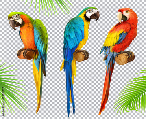 Ara parrot. Macaw. Photo realistic 3d vector icon set Canvas Print