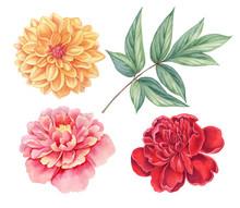 Dahlia And Peony Pink, Red, Ye...