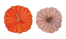 Orange And Pale Pink Pumpkin T...
