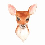 Baby Deer. Hand drawn cute fawn. Watercolor illustration  2 - 175911990