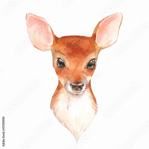 Photo  Baby Deer. Hand drawn cute fawn. Watercolor illustration  2