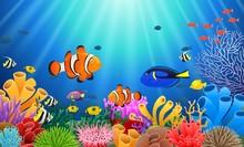 Clown Fish Under The Sea. Vect...