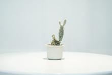 Cactus In White Pot On Round W...
