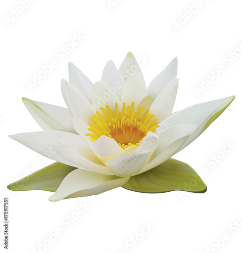 Poster de jardin Nénuphars Water lily on white background. 3D illustration