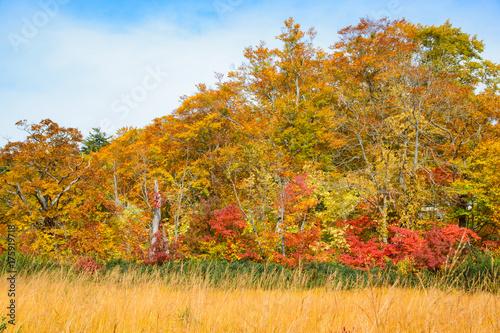 八幡平大沼の紅葉
