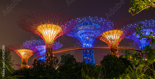 Canvas Prints Singapore Spectacular cloud forest in Singapore