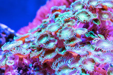 Corals In Underwater Tropical ...