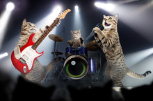 Concert Of Cats Musicians
