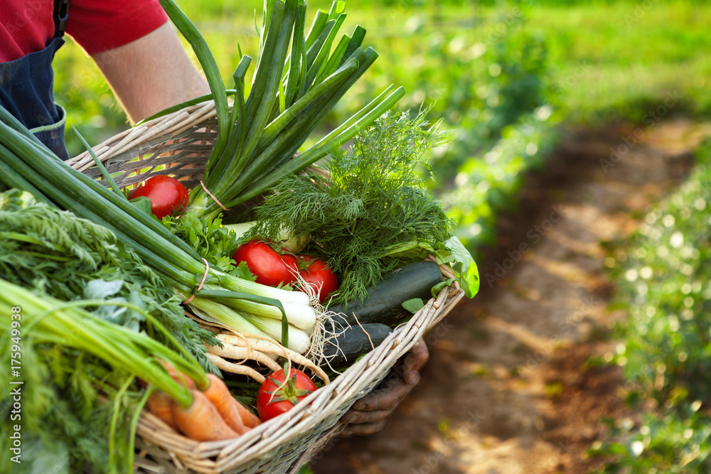 Farmer holding basket with mixed vegetables