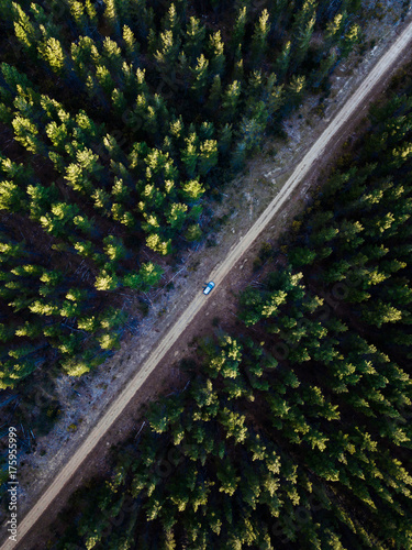 Look down aerial view at a dense pine forest with dirt road on the centre. - 175955999