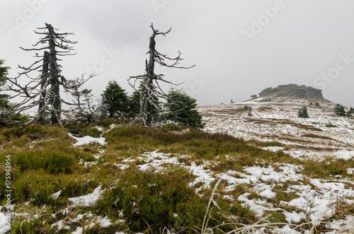 Fototapeta  Petrovy kameny, Peter's stones,Winter with snow in Jeseniky, Czech Republic
