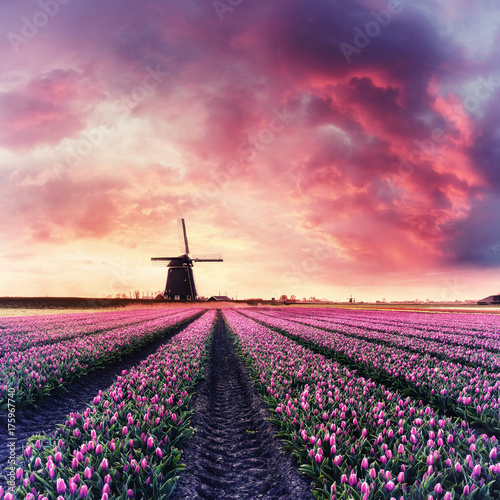 Vintage Dawn over Field of Tulip and Windmill Poster