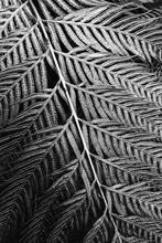 Beautiful Fern Leaf Detail