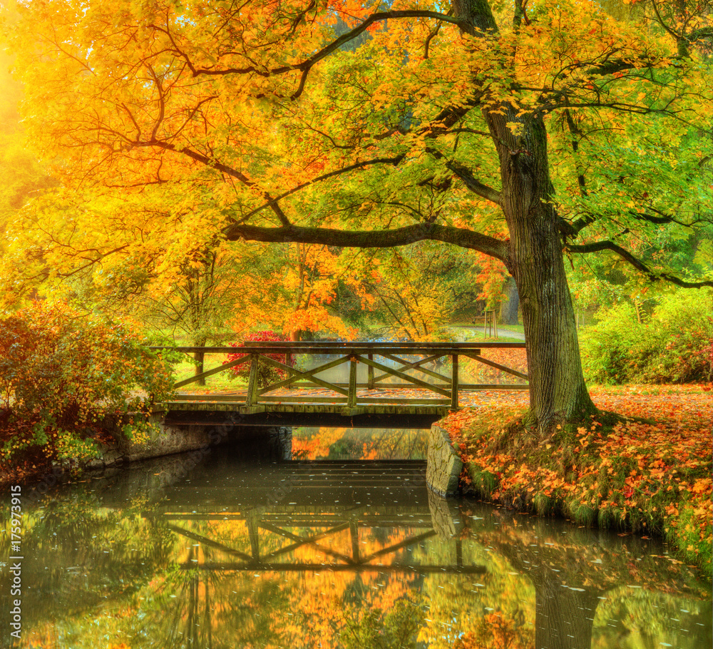 Fototapety, obrazy: Beautiful autumn scenery in park.