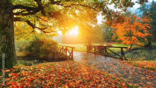 Foto op Canvas Bruggen Beautiful autumn scenery in park.