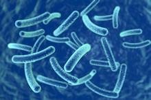 Bacteria On Blue Background, 3D Illustration