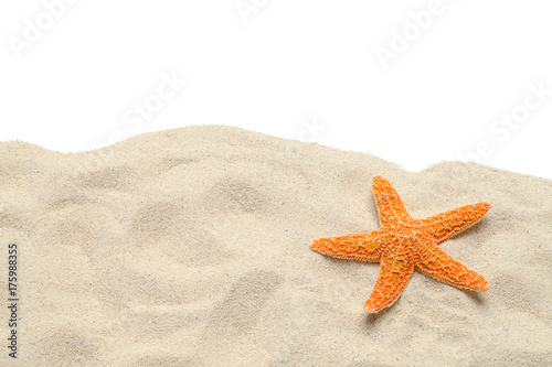 Sand Starfish Copy Space