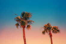 Tropical Palm Trees Against Th...