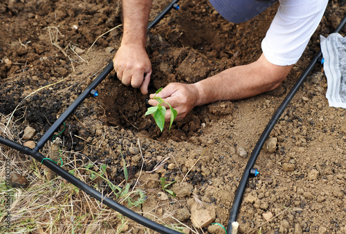 Photo Sowing in the orchard