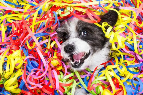 Photo sur Aluminium Chien de Crazy party celebration dog