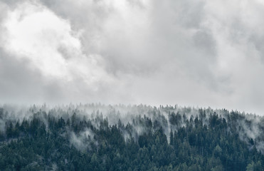 Fototapeta Forest in mist, low clouds in conifers, Austrian alps