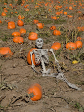 Halloween Skeleton Reclining I...