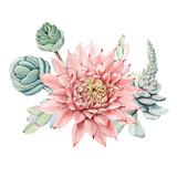 Watercolor vintage succulents bouquet - 176015390