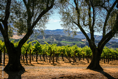 Photo  Rolling hills of California wine country