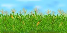 Horizontal Seamless Corn Field...