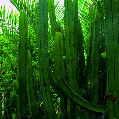 tropikalny-wzor