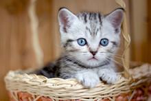 Adorable Little Kitten Sitting In A Wicker Basket.