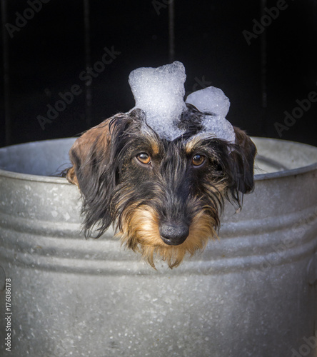 Foto auf AluDibond Hund puppy bubble bad