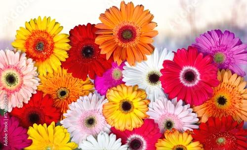 Aluminium Prints Gerbera Flower.