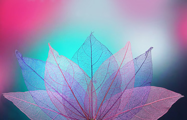 Obraz Macro leaves background texture blue, turquoise, pink color. Transparent skeleton leaves. Bright expressive colorful beautiful artistic image of nature.