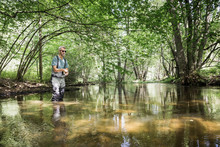 A Mature Man Is Fly Fishing On A River In Forest Area.