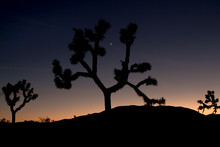 Dreamy Sunset With Silhouetted...