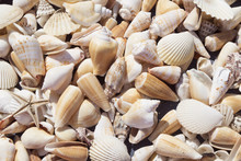 Various Seashells Background