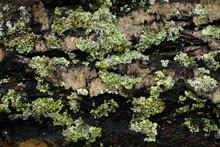 Moss On Tree Bark In Autumn