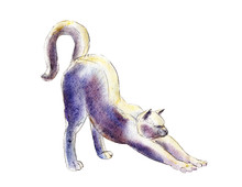 The Cat Stretches, Watercolor ...