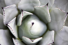 Overhead View Of A Spiky Green Cactus
