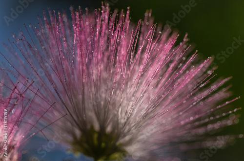 purpurowy-rozmyty-kwiat