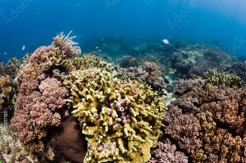 Plakat Kwitnąca, zdrowa tropikalna rafa koralowa